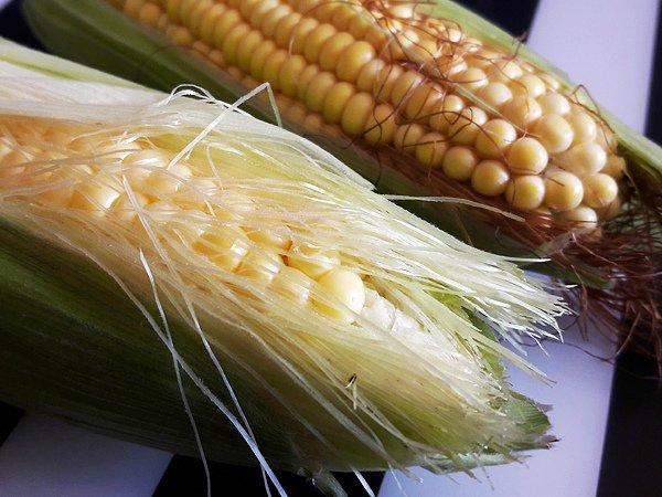 Сравнение внешнего вида кормовой и пищевой кукурузы