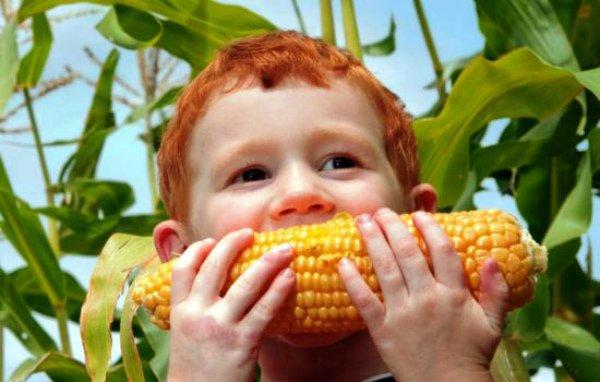 Регулярное употребление кукурузы полезно для здоровья