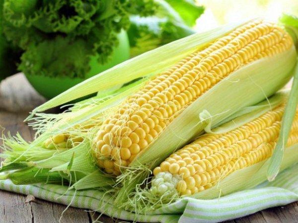 Вкусная кукуруза молочной спелости