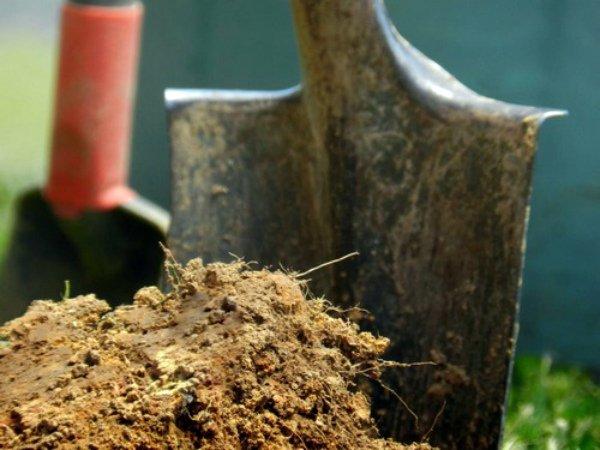 Внесение компоста в почву осенью