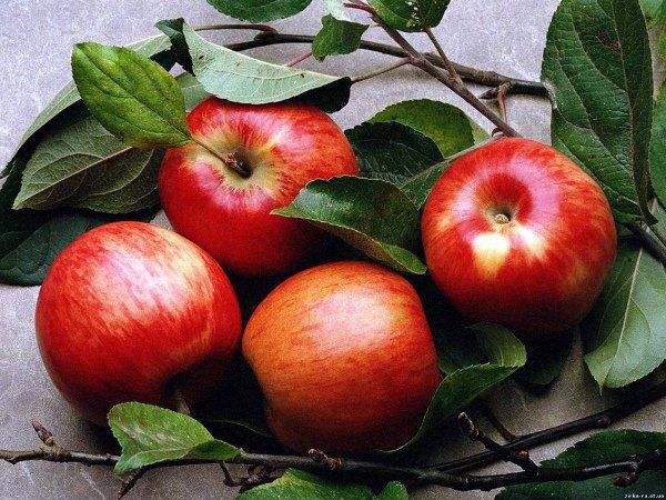 Яблоки Макинтош потребительской зрелости
