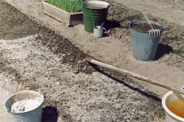 Внесение подкормок для удобрения и снижения кислотности почвы