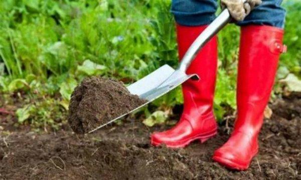 Перекопка почвы на зиму