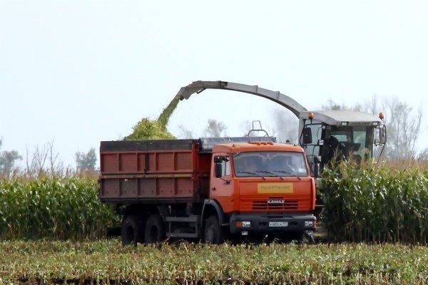 Сбор кукурузы на силос