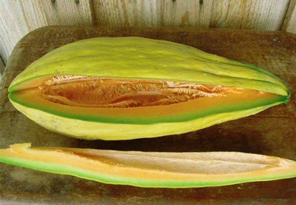 Дыня банановая – экзотический плод