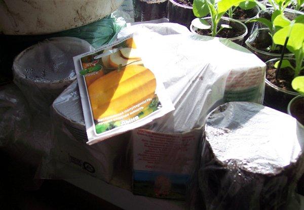 Посев семян раннеспелой дыни на рассаду
