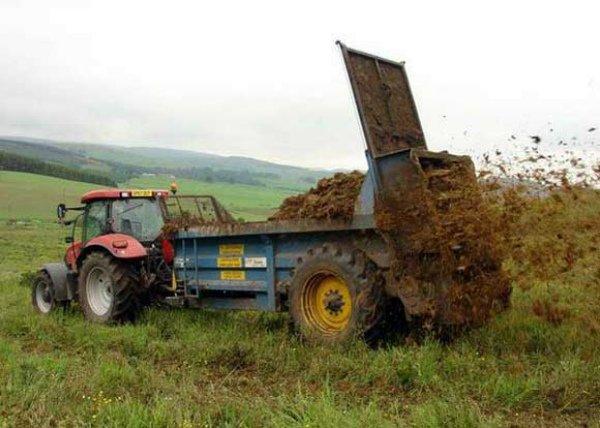Разбрасывание навоза на поле под кукурузу