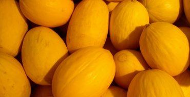 Много желтых дынь