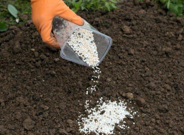 Обогащение почвы минеральными удобрениями