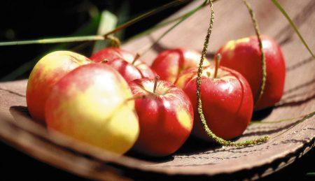 Сочные и спелые плоды яблони