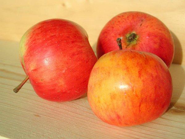 Осенние яблоки сорта Ауксис