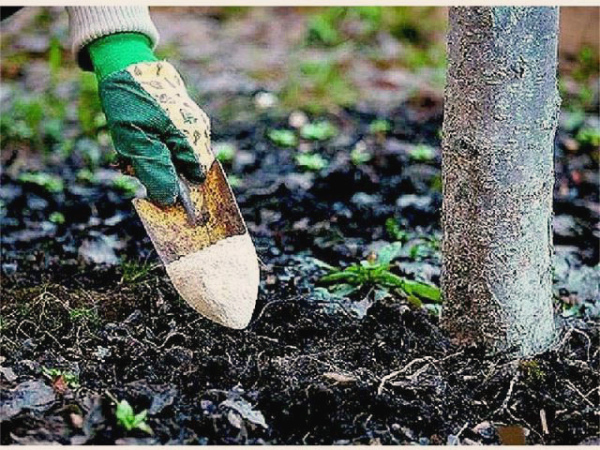 Внесение органических удобрений под яблоню