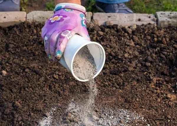 Внесение древесной золы в почву