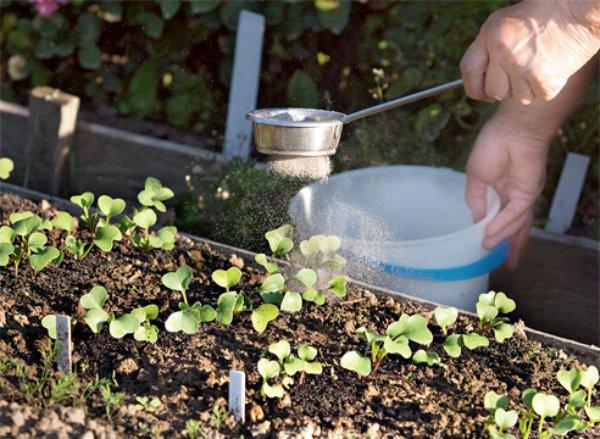 Распыление сухой смеси для защиты редиса от вредителей
