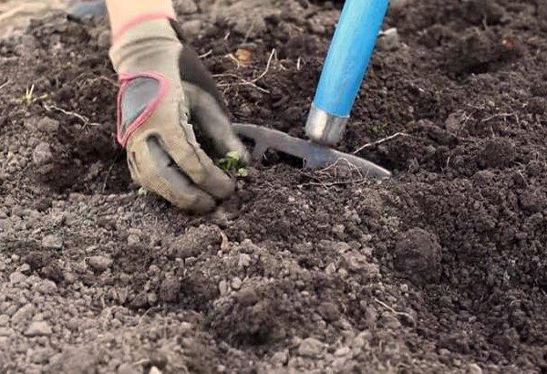 Осенняя подготовка почвы к посадке