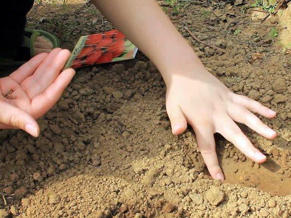 Посев редиса в грунт весной
