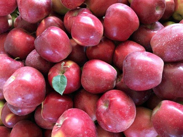 Урожай яблок сорта Глостер
