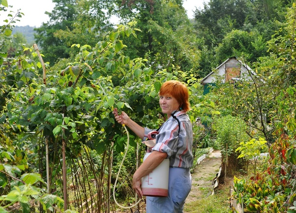 Борьба с вредителями малинника