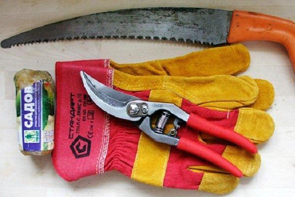 Инструменты и спецодежда для обрезки крыжовника