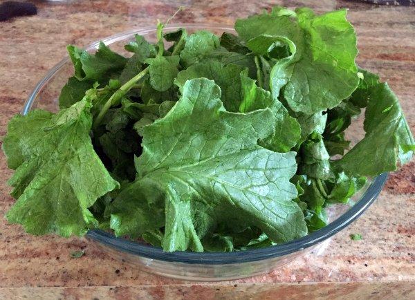 Ботва редиса для приготовления витаминного салата