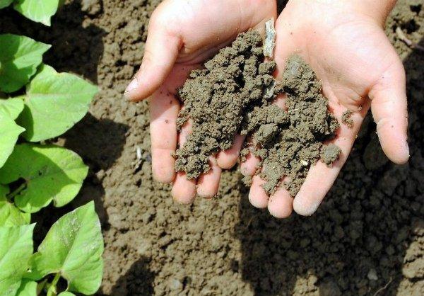 Истощение почвы из-за несоблюдения севооборота