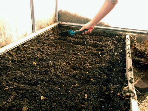 Подготовка грядок под посев редиса в теплице