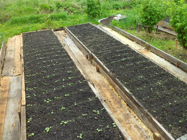 Выращивание редиса на высоких грядках