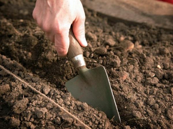 Подготовка грядок к посеву редиски