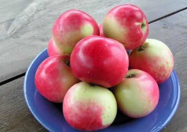 Яблоки сорта Солнцедар на тарелке