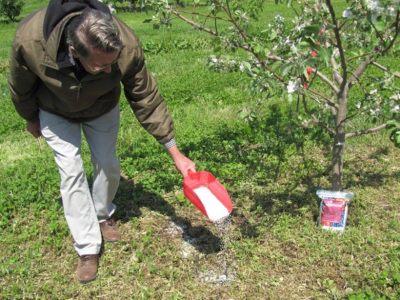 Обогащение земли под яблоню минералами