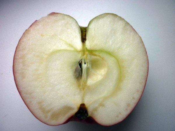 Плод яблони Звездочка в разрезе