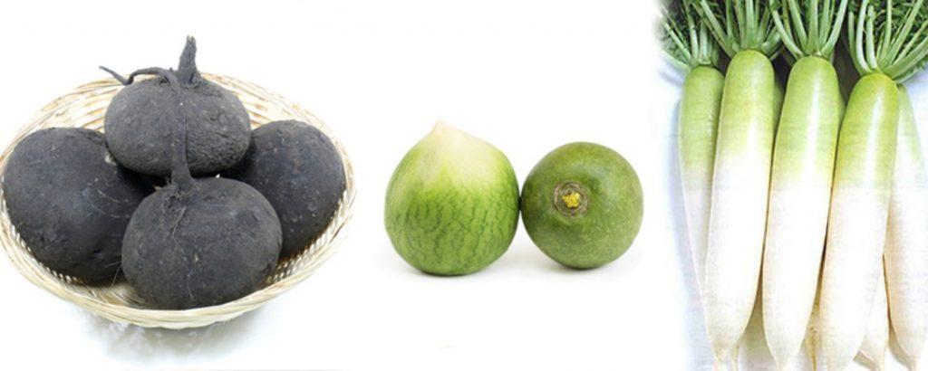 Разновидности полезной спелой редьки