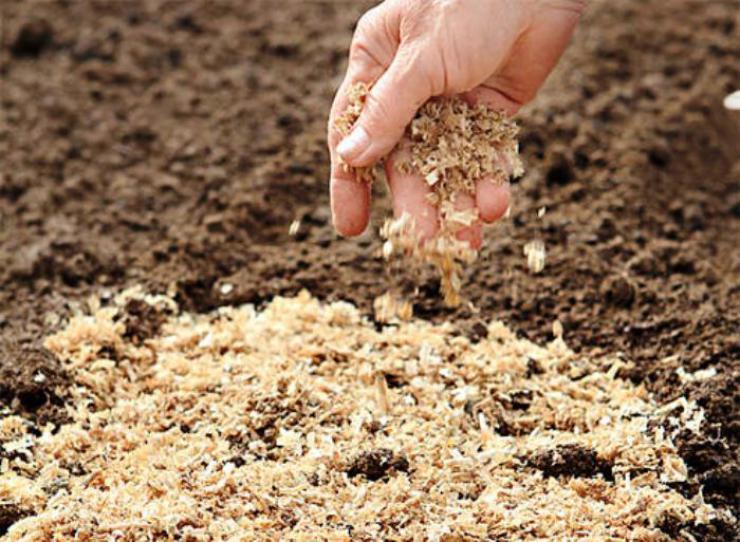 Мульчирование почвы древесными опилками
