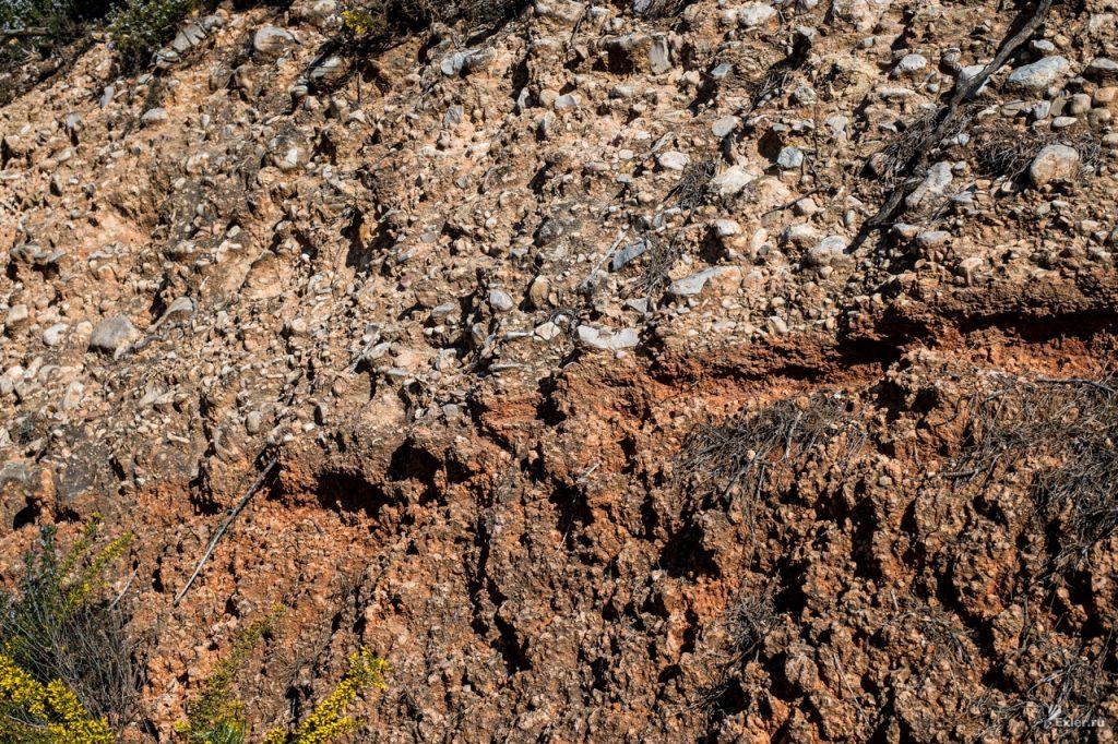 Суглинистая почва для выращивания редьки