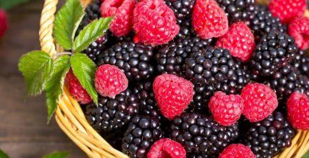 Свежие ягоды ежевики Натчез