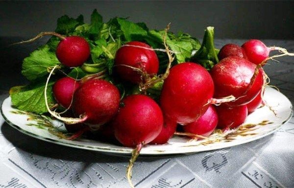 Урожай редиса Тепличный Грибовский