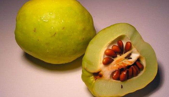 Плод айвы в разрезе