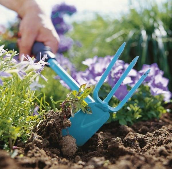 Окучивание кустов и прополка от сорняков