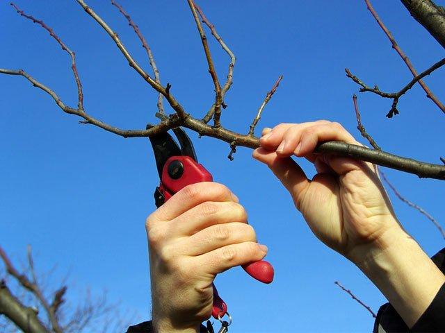 Весенняя обрезка дерева