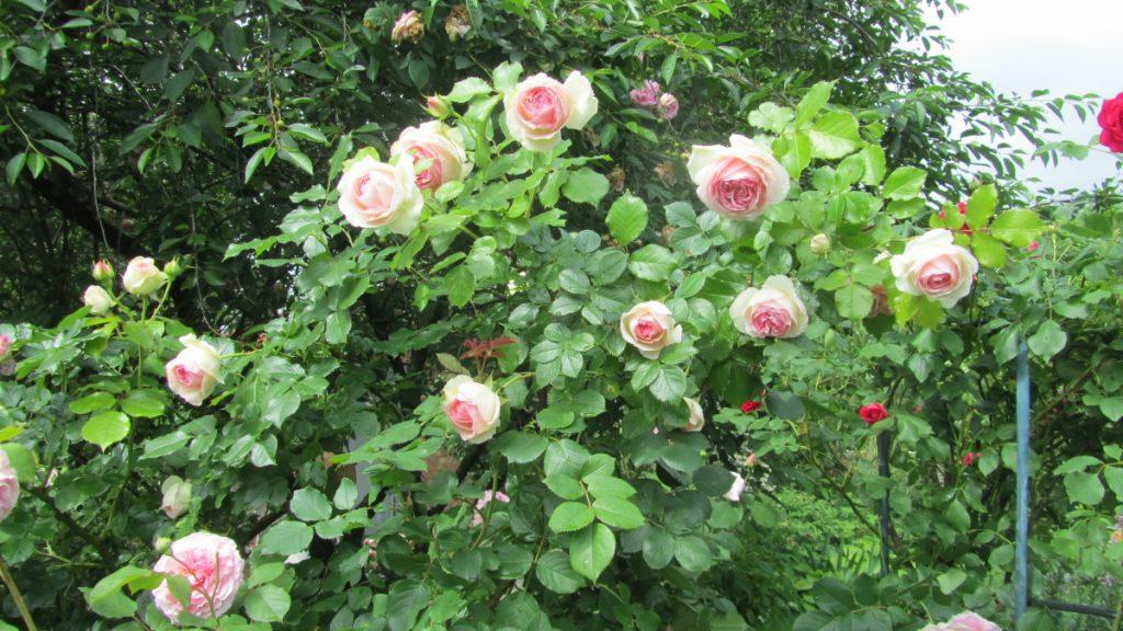Куст в качестве декора сада