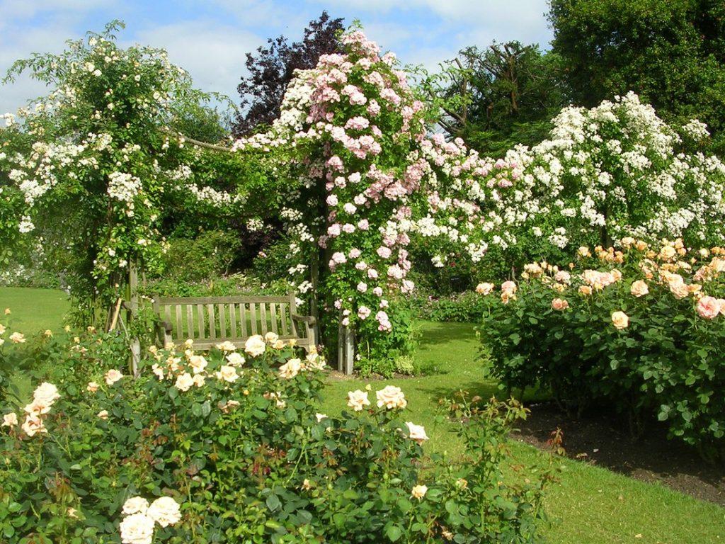 Столб для роз плетистых