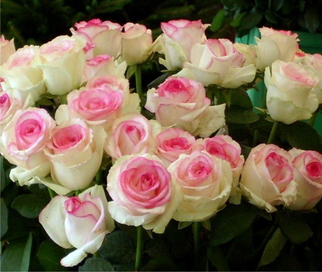 Букет нежно бело-розовых роз Дольче Вита