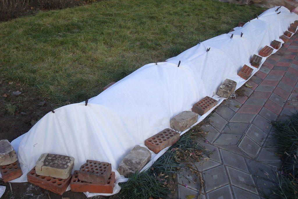 Укрытие кустов лутрасилом, зафиксировано кирпичами