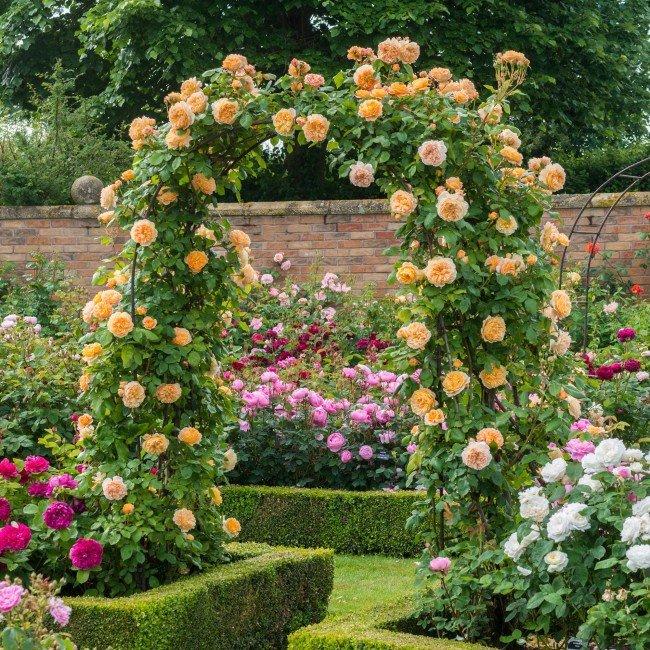 Арка из роз в саду