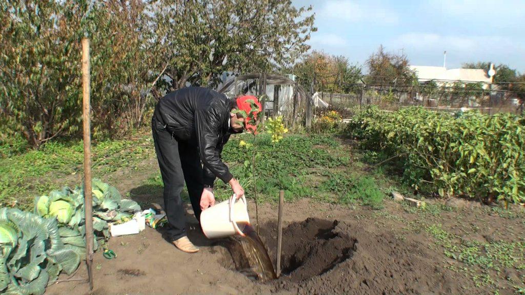 Посадочная яма для яблони
