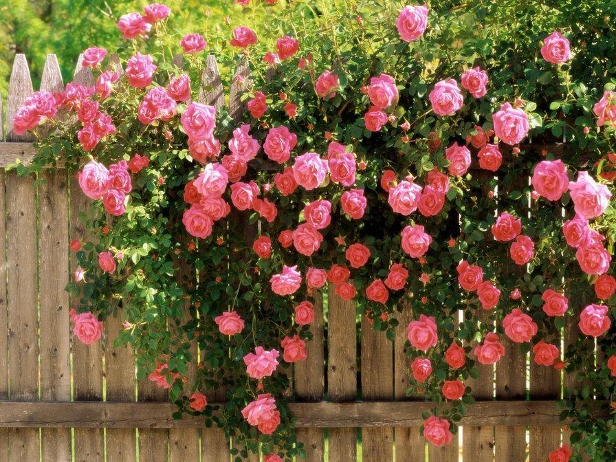 3825 руб - Купить букет из 51 кустовой розы в СПб | 672x896