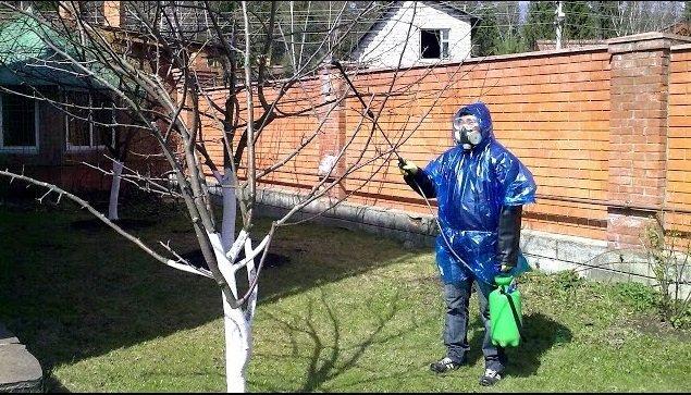 Опрыскивание фруктового дерева весной