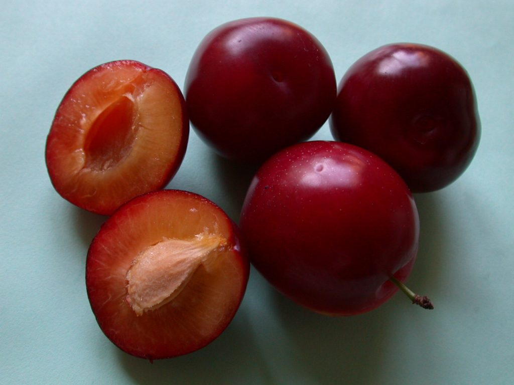 Селекционная алыча красного цвета