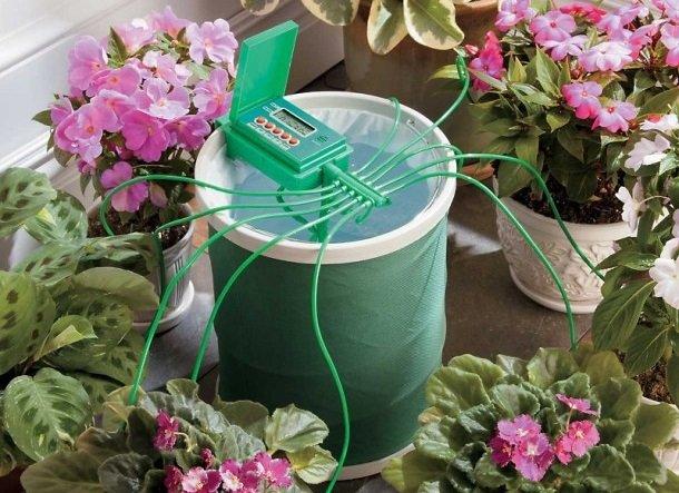 Капельный полив домашних цветов