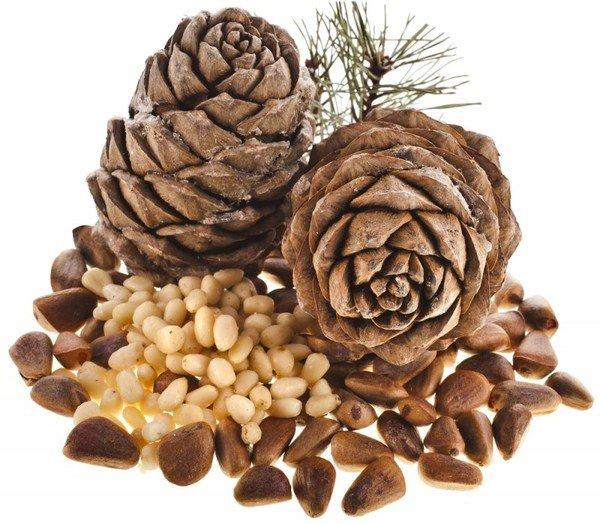Кедровые орехи в шишке